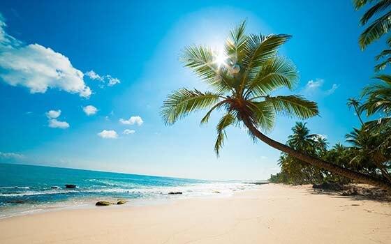 palm-beach 2019